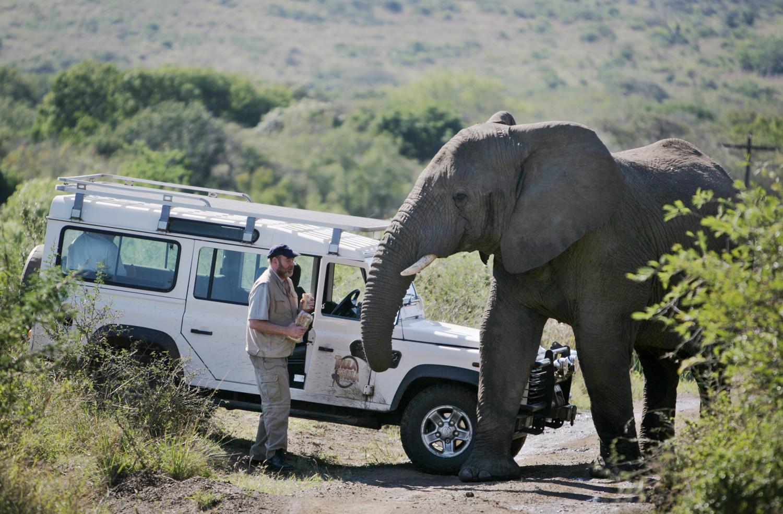 Der Elefantenflüsterer Lawrence Anthony mit seinem Elephanten Nana auf Thula Thula