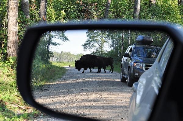 Riding Mountain Nationalpark Manitoba