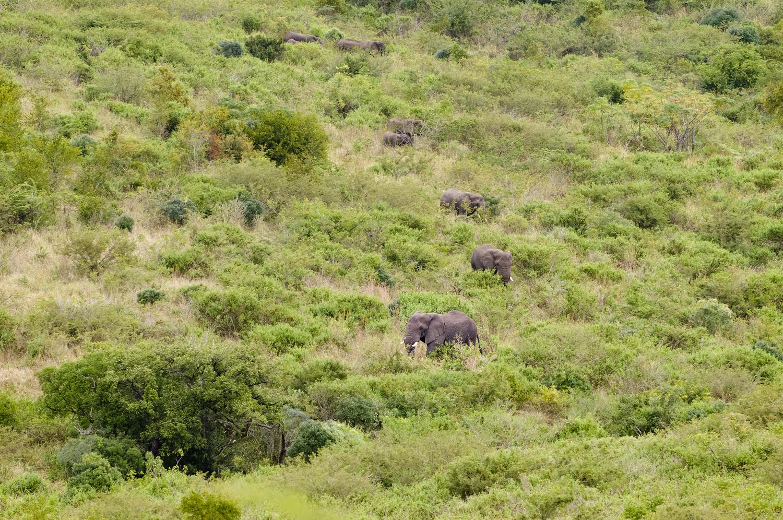 Südafrika, KwaZulu-Natal, Thula Thula Private Game Reserve