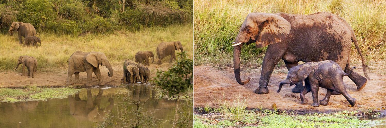 Thula Thuöa and its famous elephants