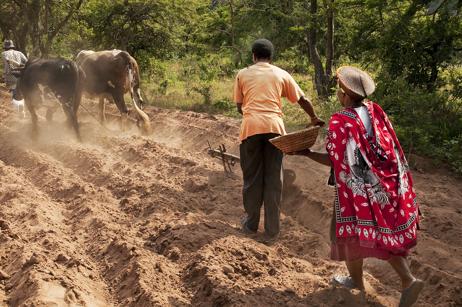 KwaZulu-Natal, Zulus and their traditional work in the field