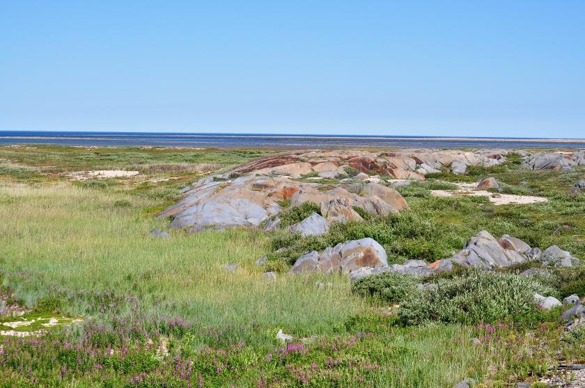 Baumlose Tundra an der Hudson Bay