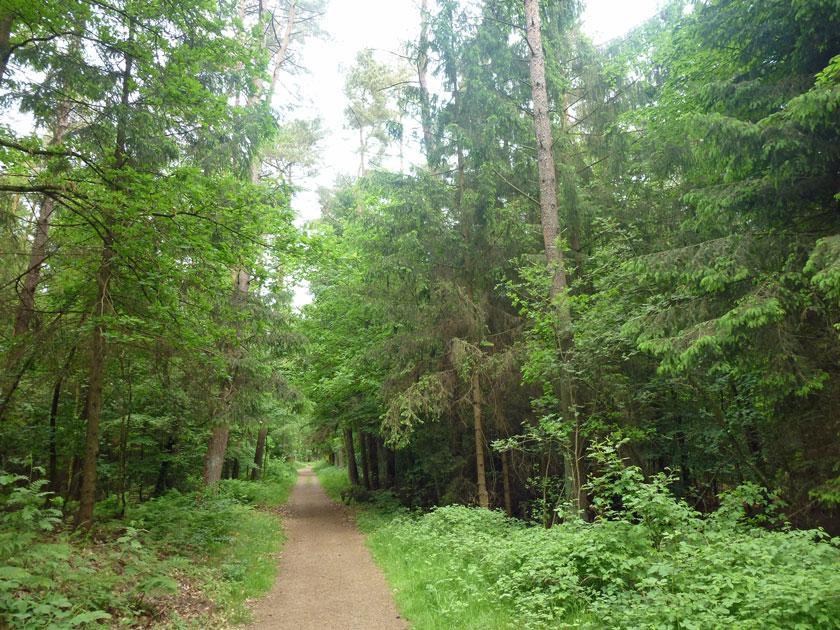 Wandern in Norddeutschland an der Wakenitz auf dem Drägerweg