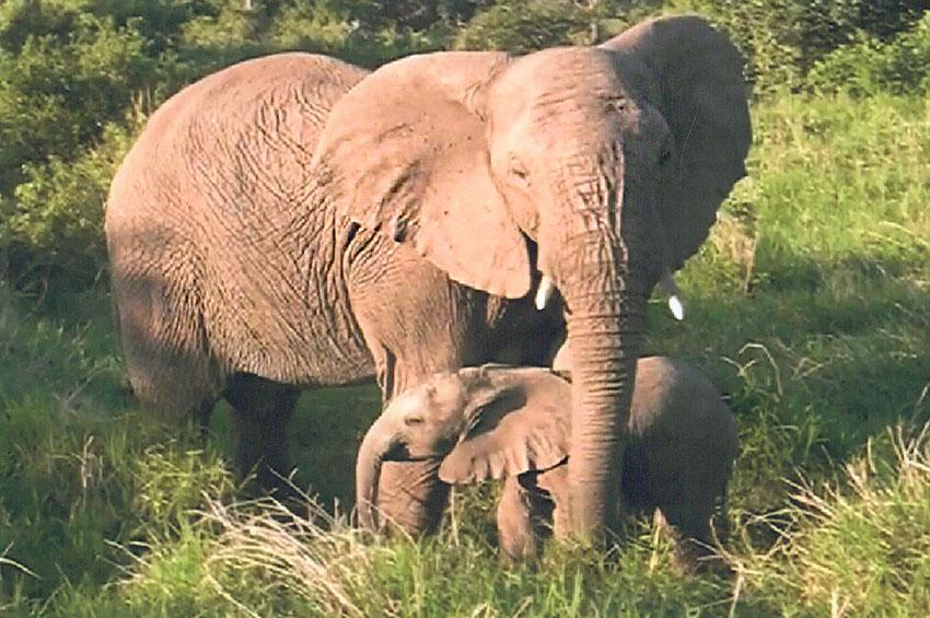 Der Elefantenflüsterer und seine Herde