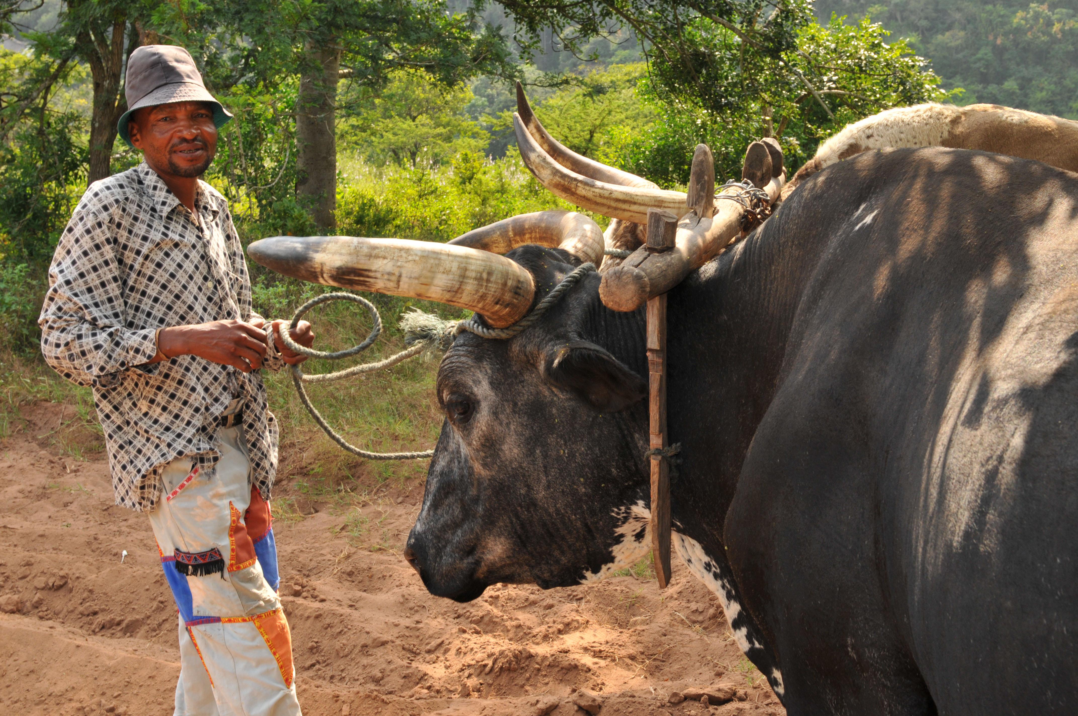 KwaZulu-Natal - Reiseimpressionen