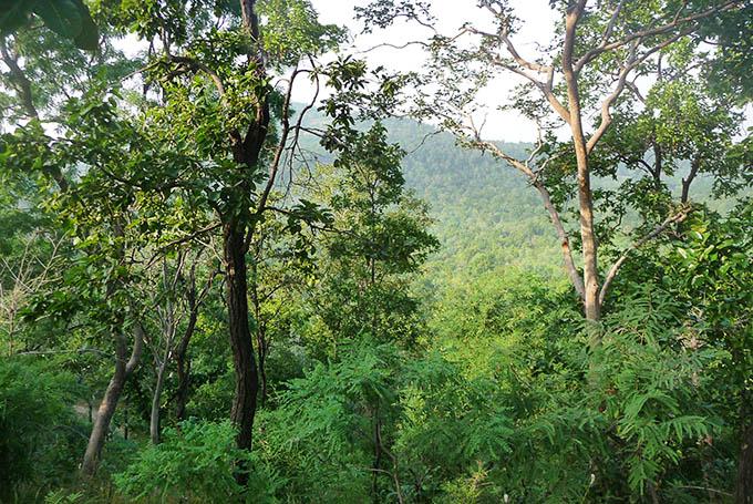 Auf den Spuren des Tigers im Bandhavgarh Nationalpark