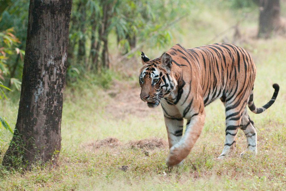 Besuch bei Shir Khan - Urlaub im Dschungelbuch