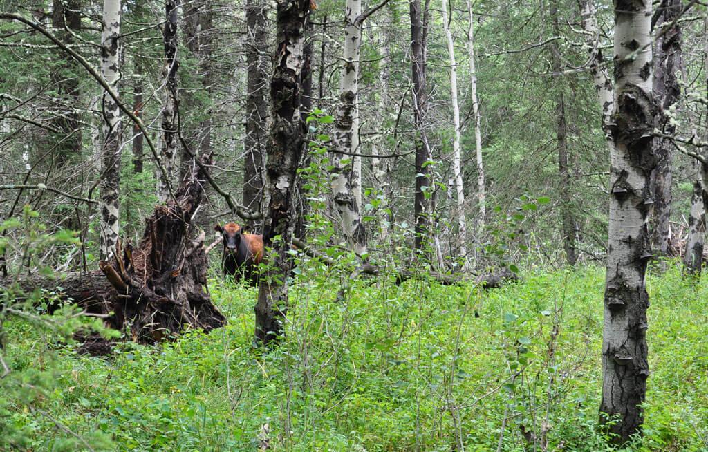 Kanada Alberta Cypress Hills Provicial Park