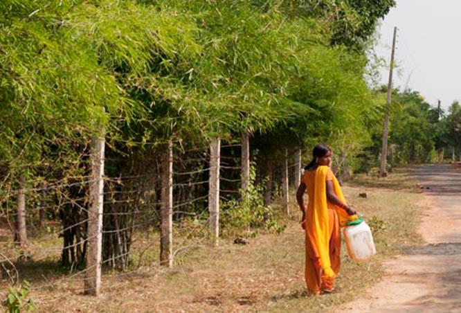 Beauty in Madhya Pradesh