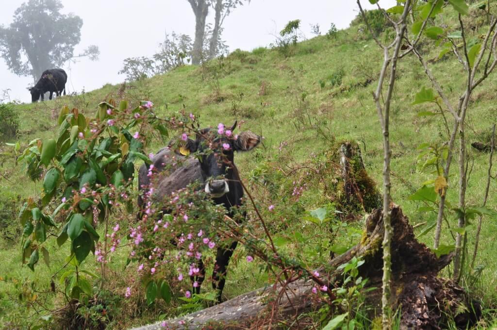 Wanderung in Boquete