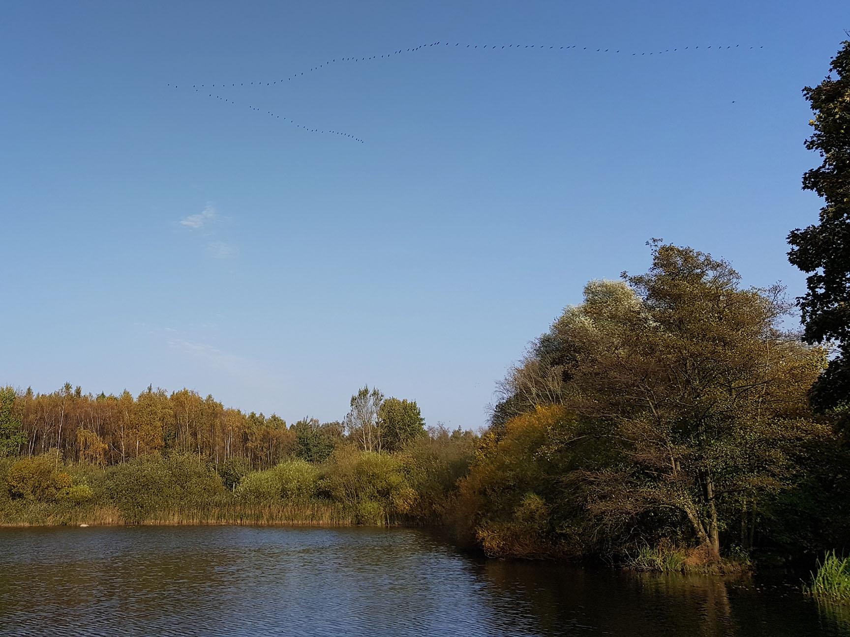 #Landlust, #Natur, #Gänseflug, Naturschutzgebiet