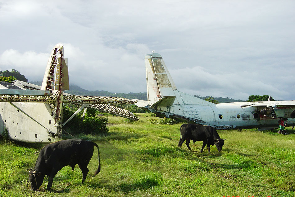Land Art - Ochsen und Flieger