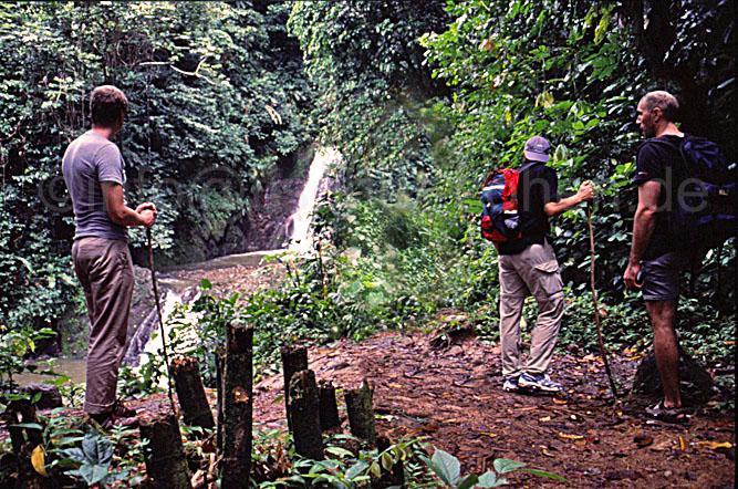 Tropischer Regenwald in seiner ganzen Pracht: Der Grand Etang Nationalpark