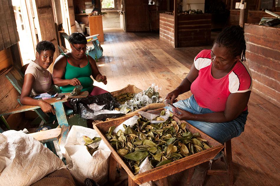 Gewürzinsel Grenada