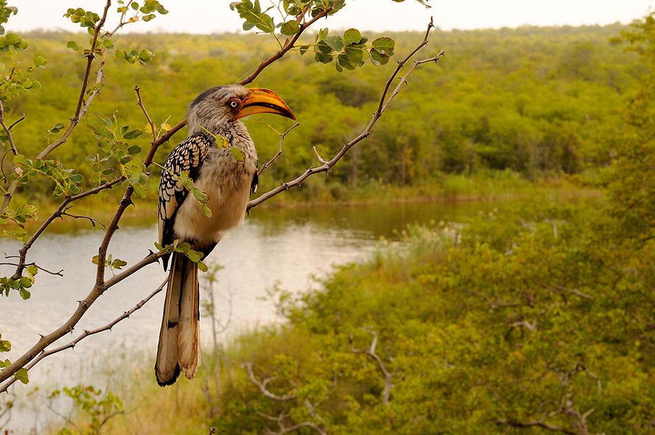 Die Makuleke Region - das Mekka für Birder
