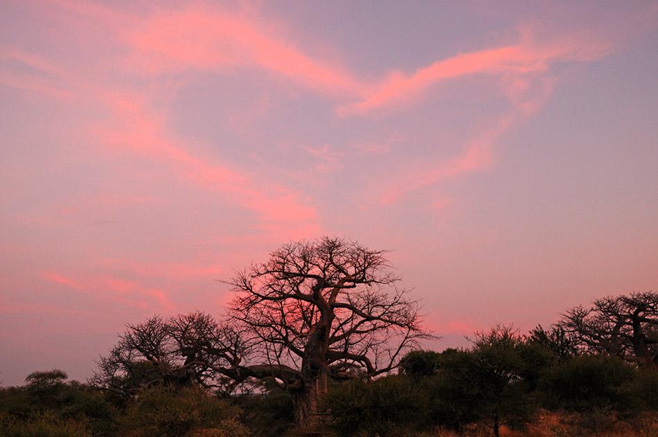 Traumpanorama im Great Limpopo Transfrontier Park ©Regina Fischer-Cohen